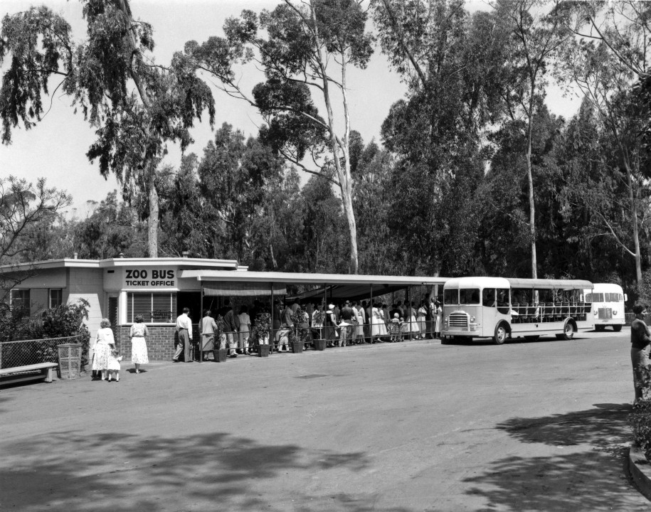 The new Bus Tour ticket office and canopied passenger loading queue opened on June 17, 1956. Ken Howard was the Bus Tour chief driver-guide.