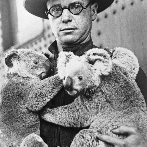 Curator of mammals Richard Addison holds the Zoo's first two koalas, Snugglepot and Cuddlepie.
