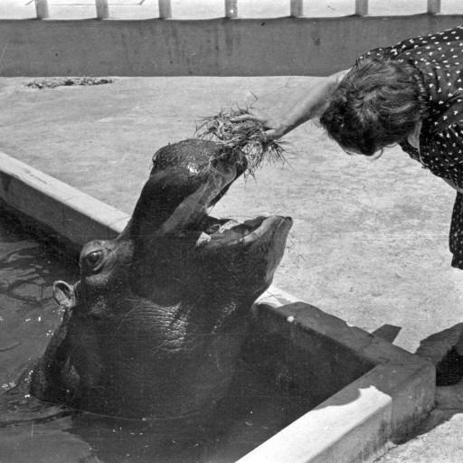 Puddles was one of Belle Benchley's favorites, and she would stop by to feed him treats of grass and hay.