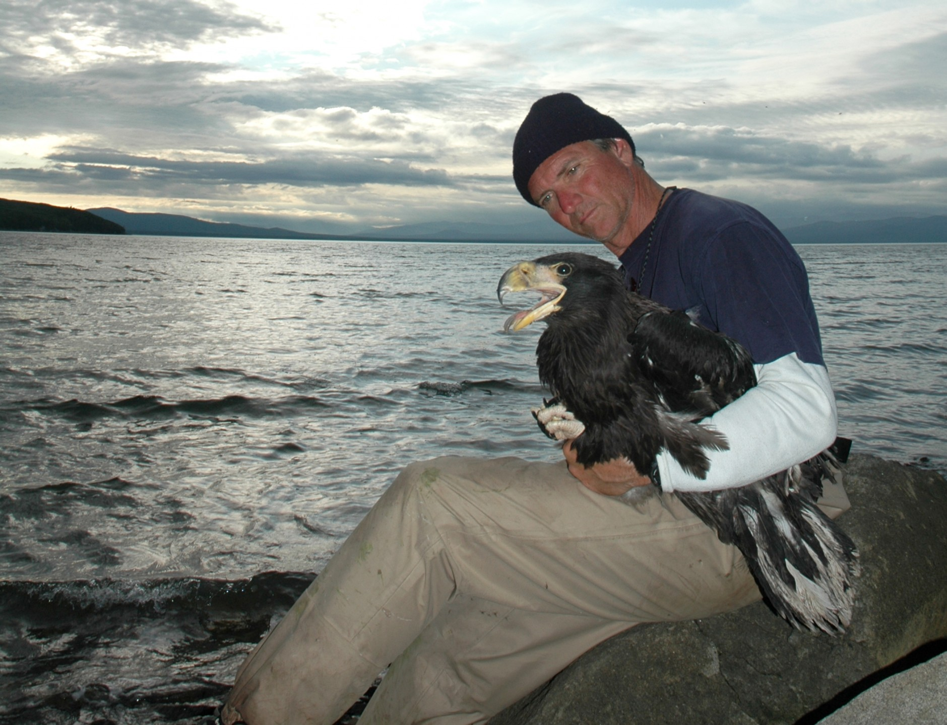 Dave Rimlinger, San Diego Zoo curator of birds, holds a Steller's sea-eagle during the expedition. Dave's wind-chapped and sunburned appearance attest to the harsh conditions of working along the Siberian coast. And note his firm grip on the eagle's legs and feet—those talons deserve respect!