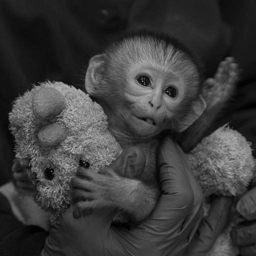 Mosi Musa getting some TLC in the animal care nursery.